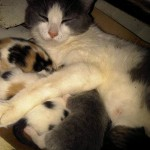 Sweet Pea and her 5 kittens!