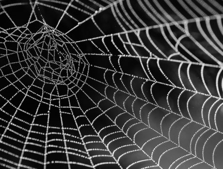 Motivational Minute: Clear Out the Cobwebs